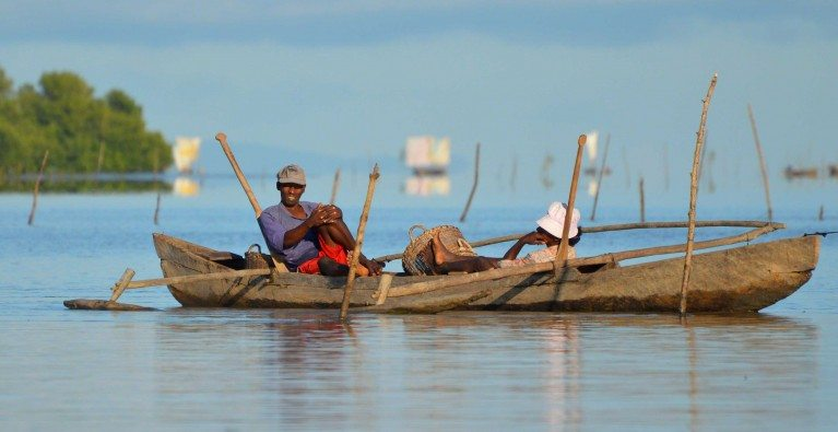 Seeking Madagascar's sawfishes