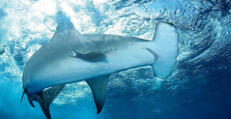 Call for entries for the SOSF Marine Conservation Photography Grant