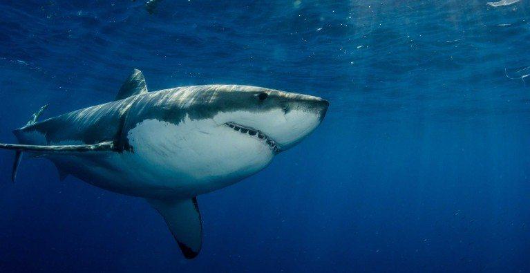 Rebranding sharks