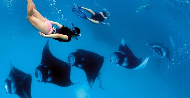 Turning the tide for manta and devil rays