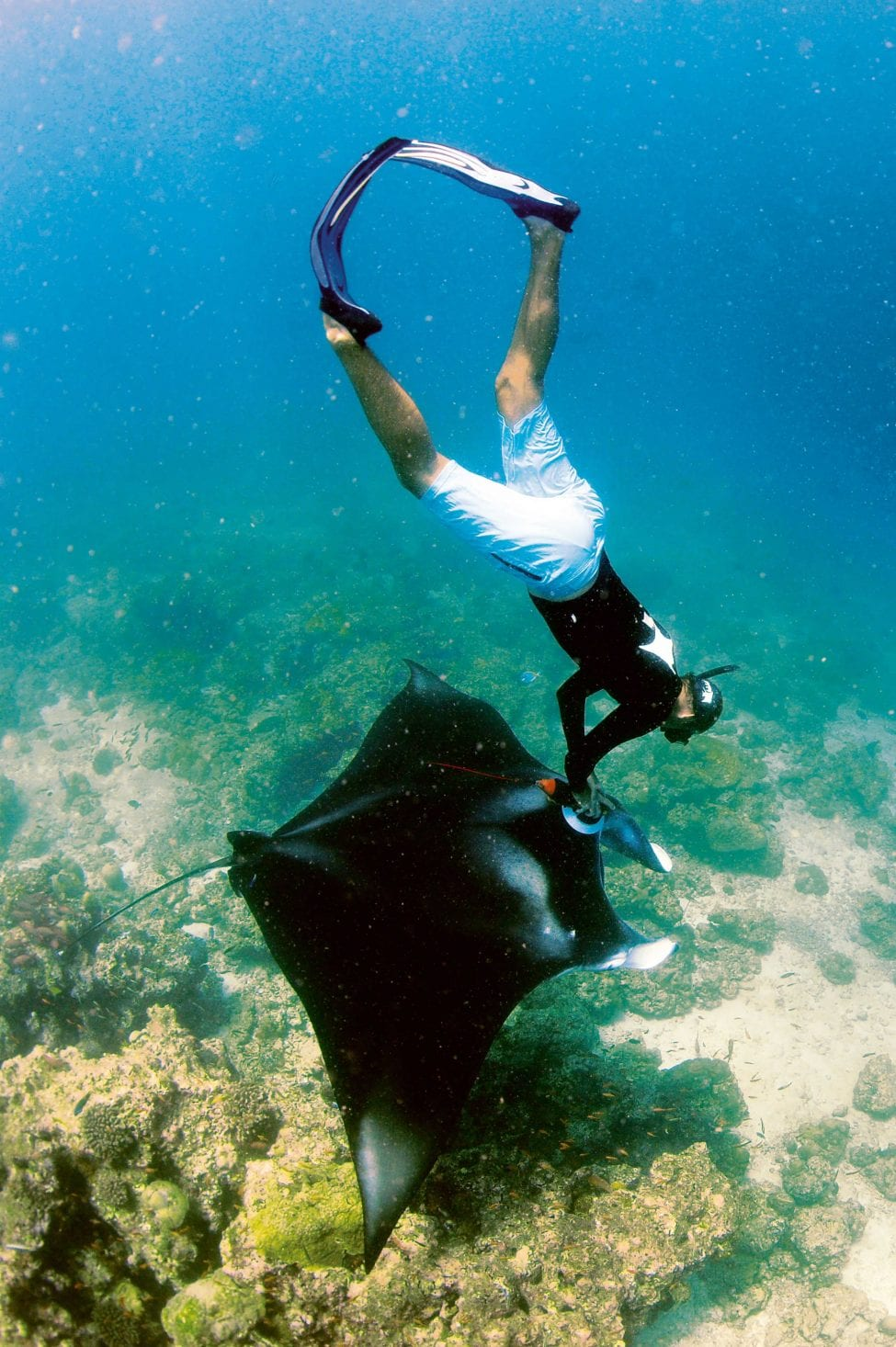 A researcher swims down to attach a Crittercam to a reef manta in the Raa Atoll, Maldives. The insights delivered by these cameras into how mantas lead their lives help to guide better policy and protection measures for these animals.<br /> Photo by Guy Stevens | Manta Trust