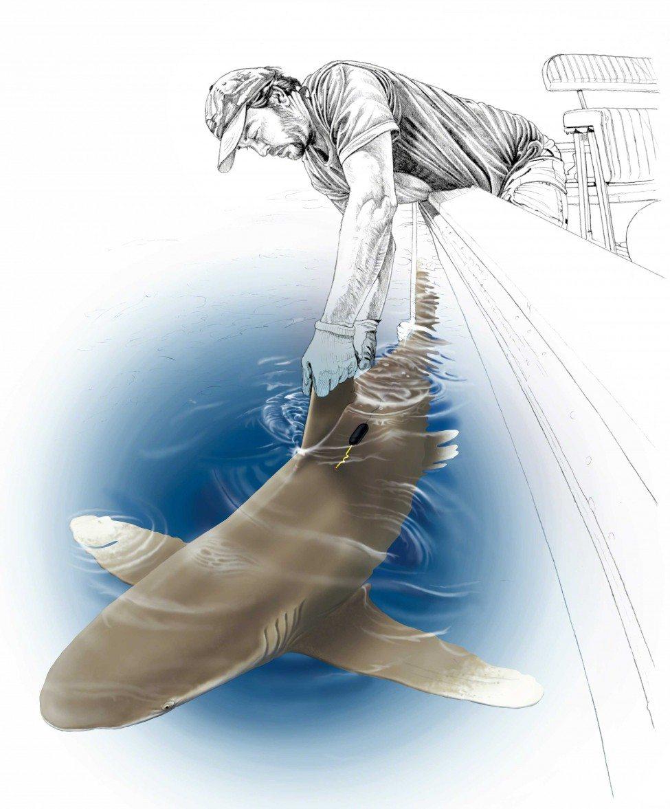 Illustration by Marc Dando