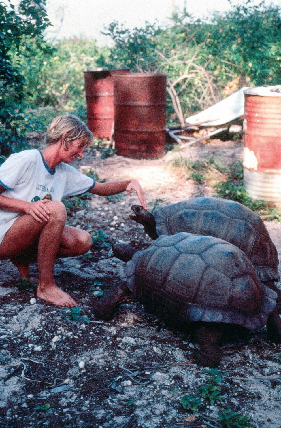 Jeanne Mortimer with giant tortoises on Aldabra Atoll in the Seychelles in 1982, soon after she arrived in the country to help assess the status of its sea turtle populations.<br />