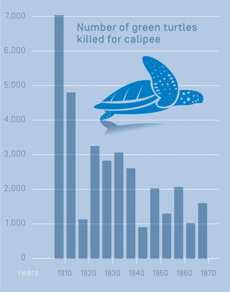 The numbers of green turtles killed for calipee between 1907 and 1968. Each bar indicates the average number killed during a five-year period, except the first and last bars which depict four- and three-year periods, respectively.