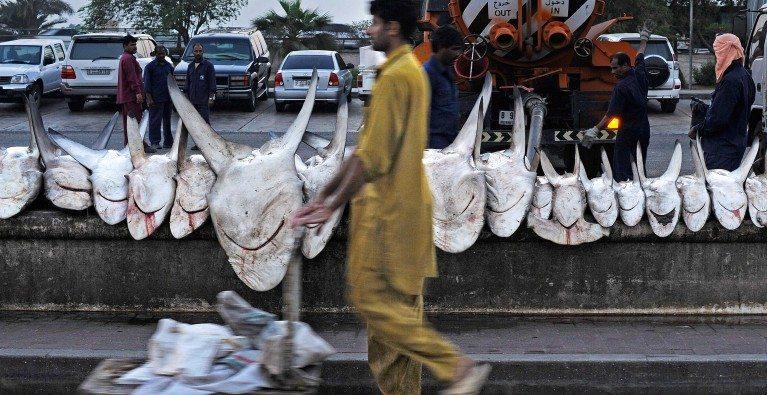 United Arab Emirates steps up its shark protection