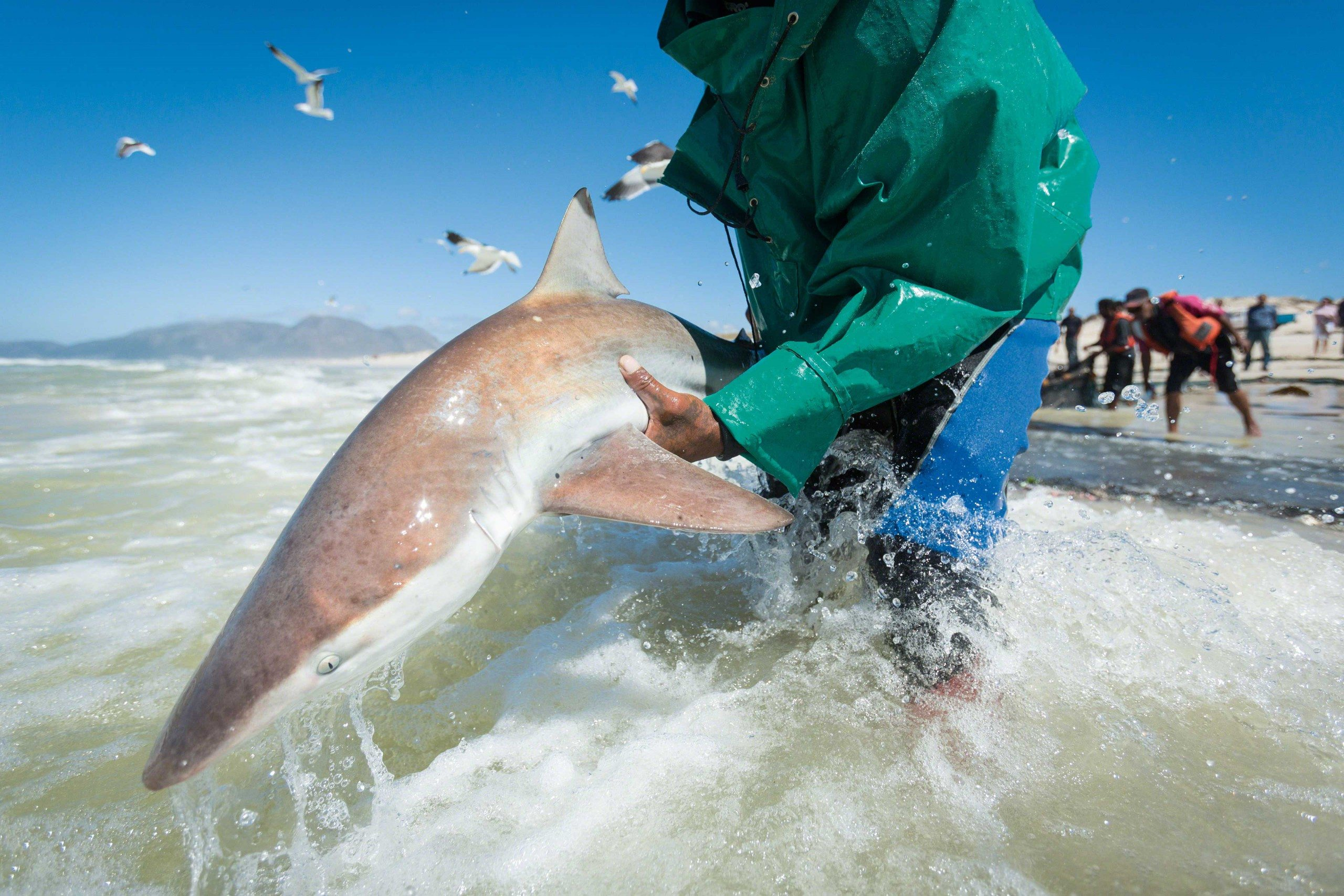 Nurse Sharks Not As Harmless As They Seem  Earths Friends