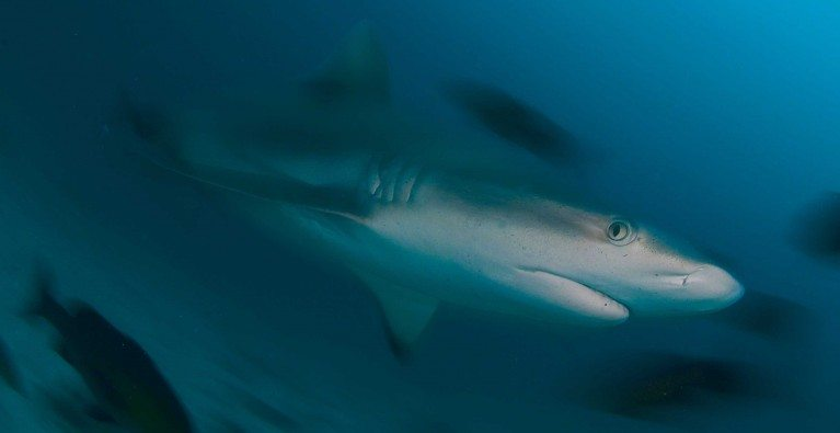 Seeking Sanctuary: Sharks in the Seychelles