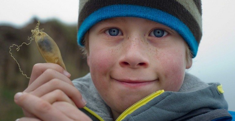 The Great Eggcase Hunt