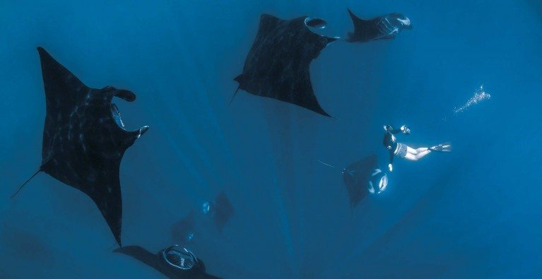 Conserving mantas with compassion and inspiration