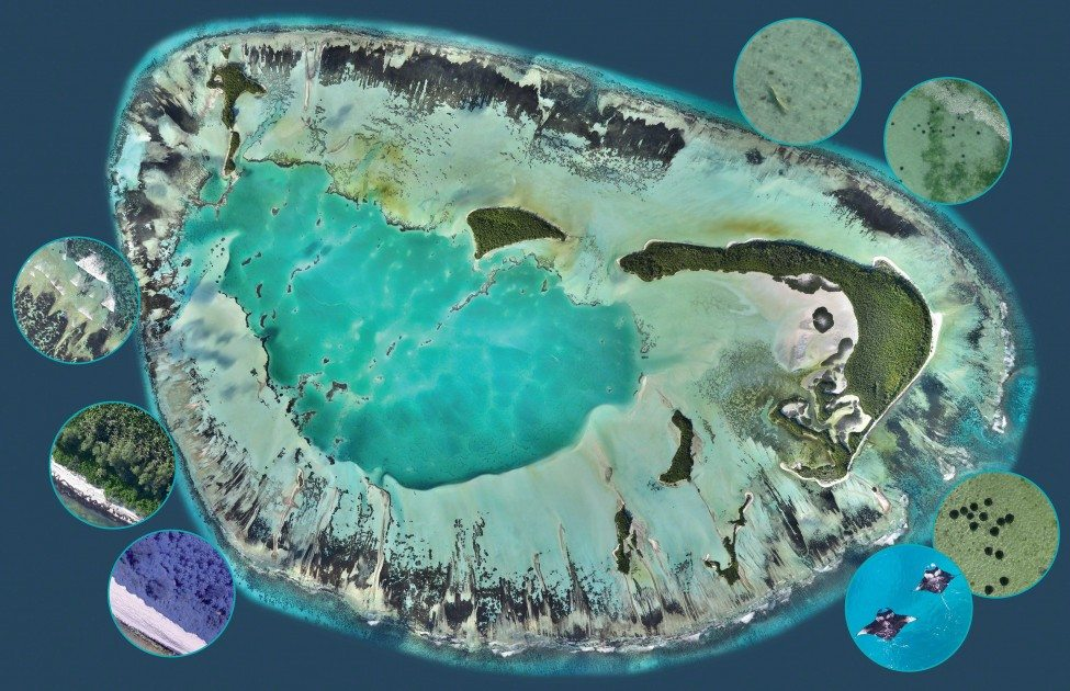 This high-resolution map is a composite of thousands of images captured with drones flying simultaneously. The software ensures that any moving objects are discarded, but the circular images show some of the fauna and flora that was recorded during low-altitude flights.