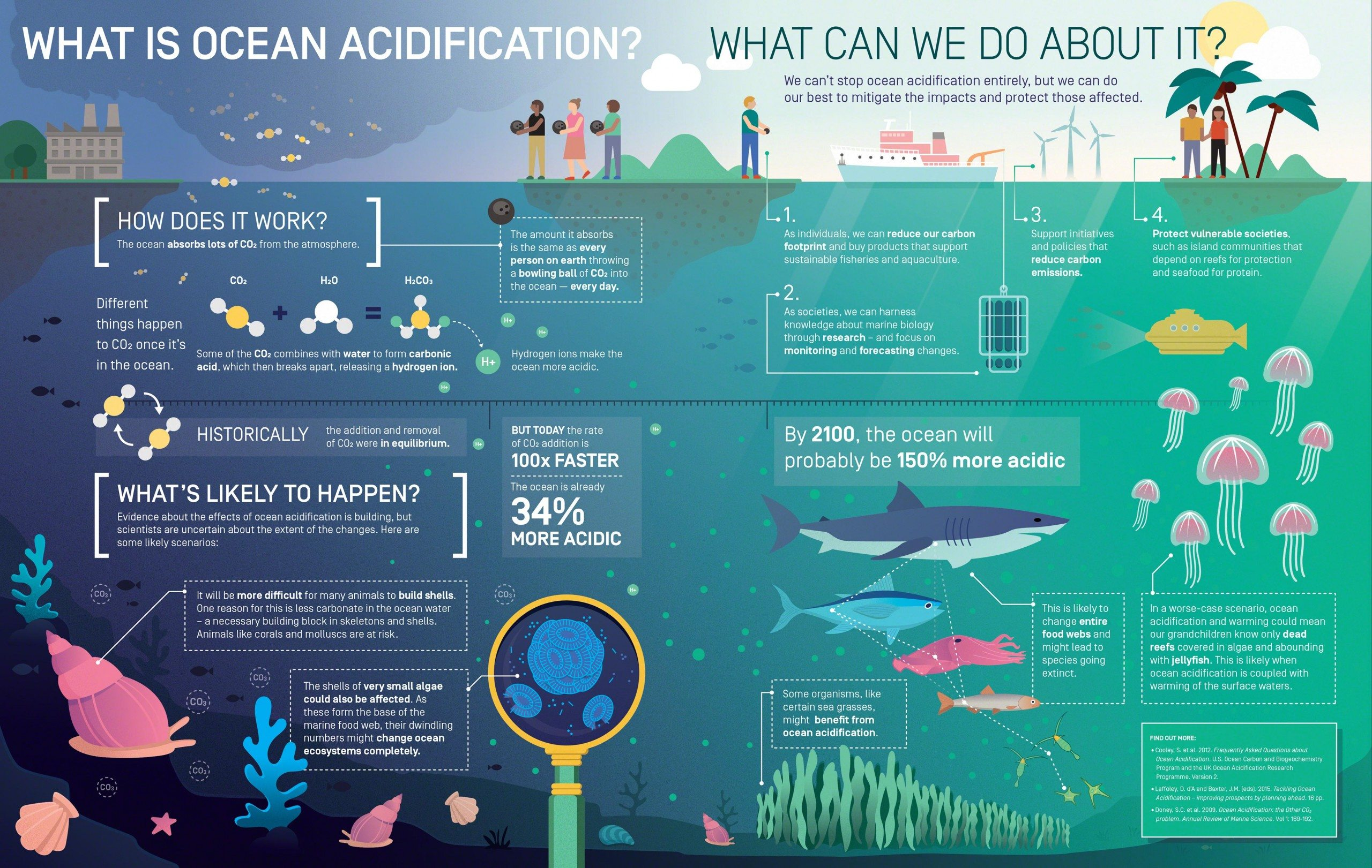 The Effects of Overfishing on Oceans - Essay Example