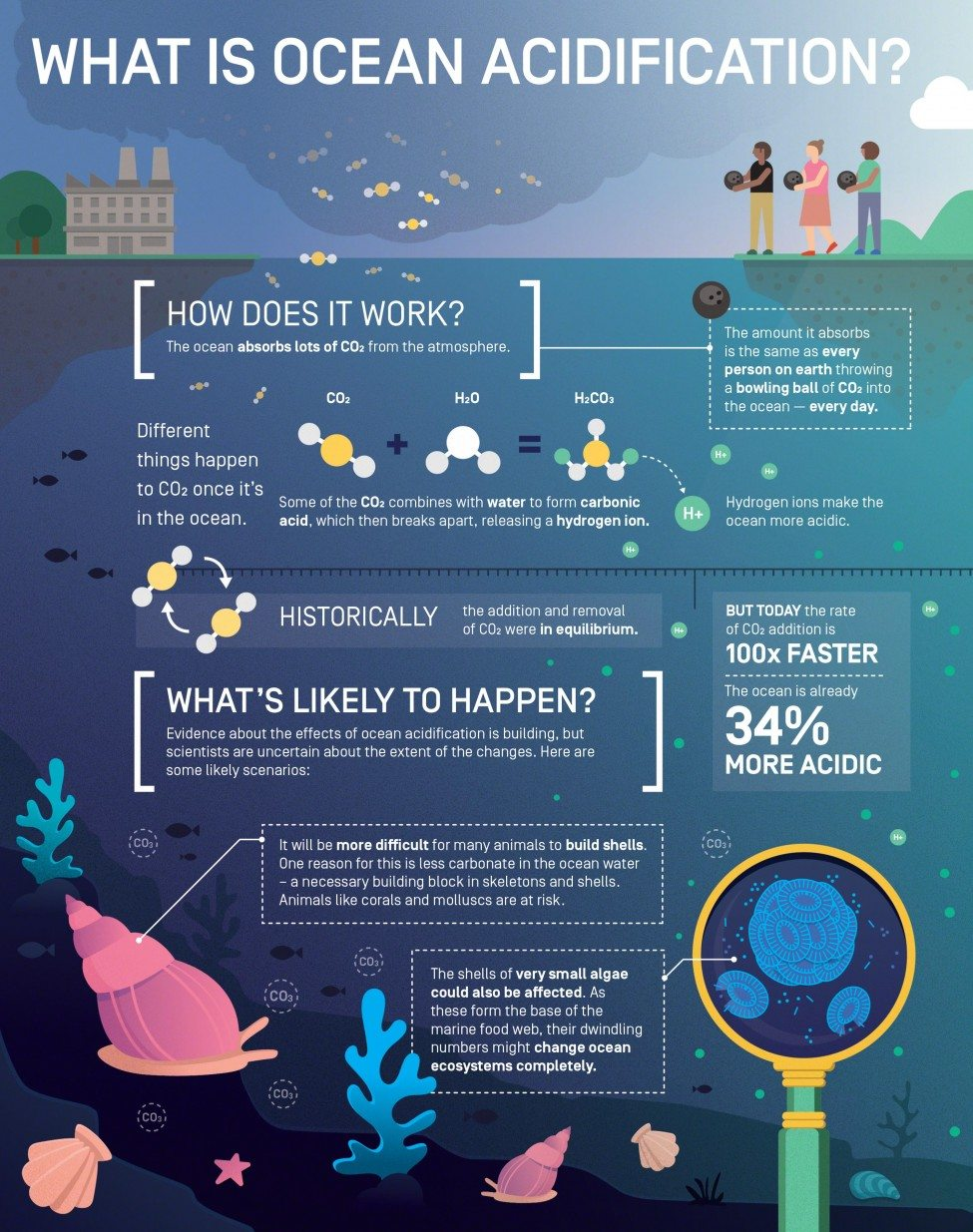 What is Ocean Acidification?<br /> Infographic by Elzemiek Zinkstok | Lushomo for the Save Our Seas Foundation