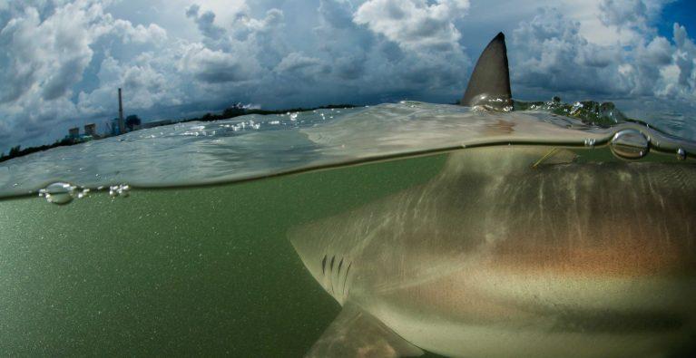 Urban Pioneers: Floridas Marine Wildlife