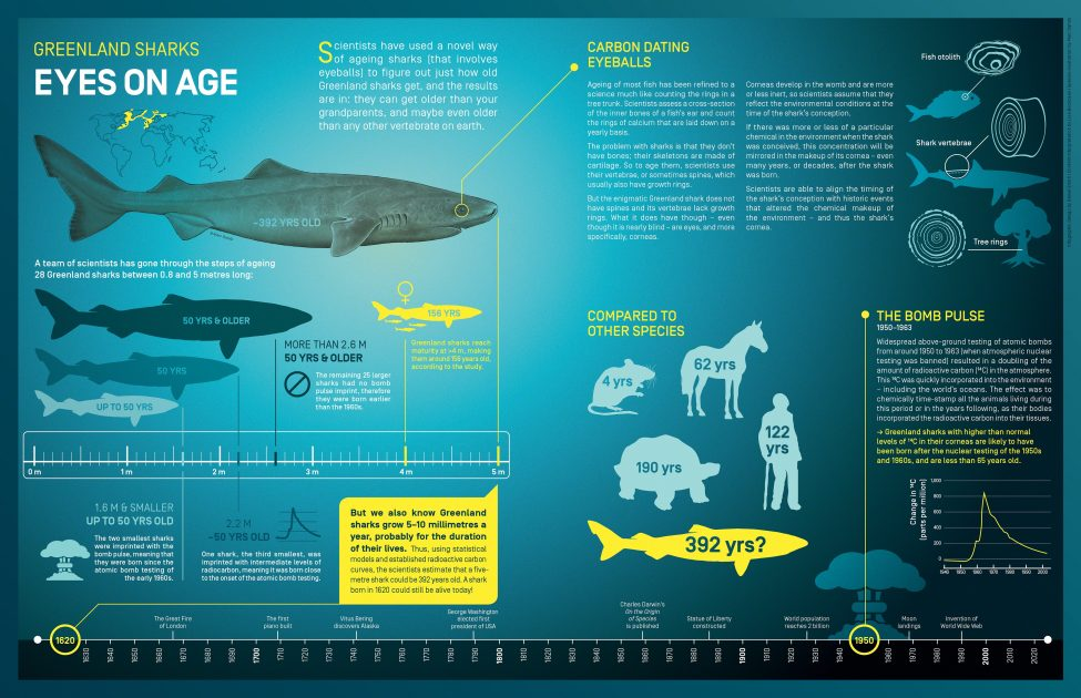 Eyes on Age<br /> Infographic design by Daniel Smith | Content interpretation by Lisa Boonzaier | Species illustration by Marc Dando | © Save Our Seas Foundation Copyright 2016