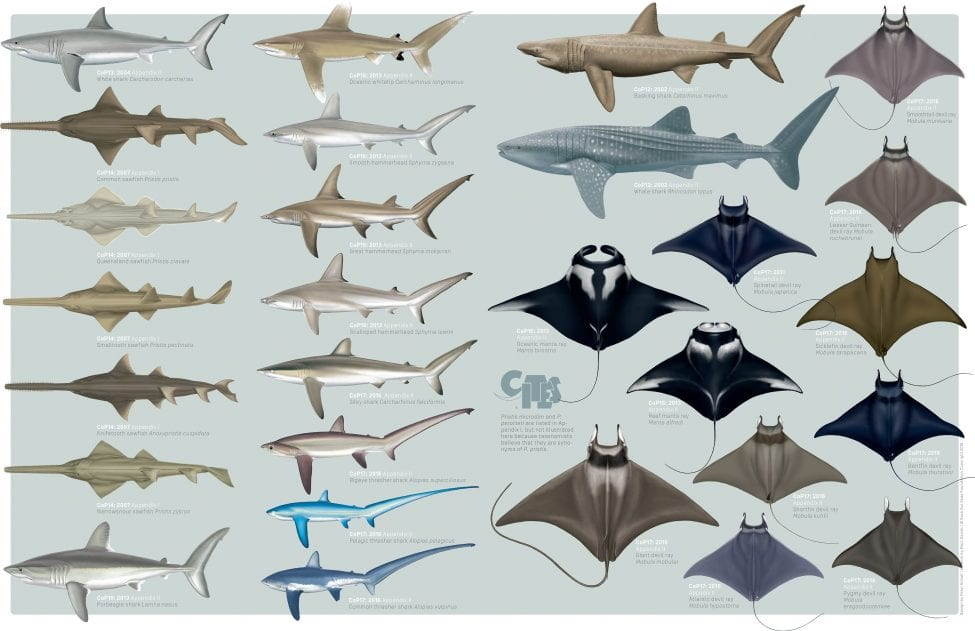 Illustrations by Marc Dando | Design by Peter Scholl | © Save Our Seas Foundation Copyright 2016