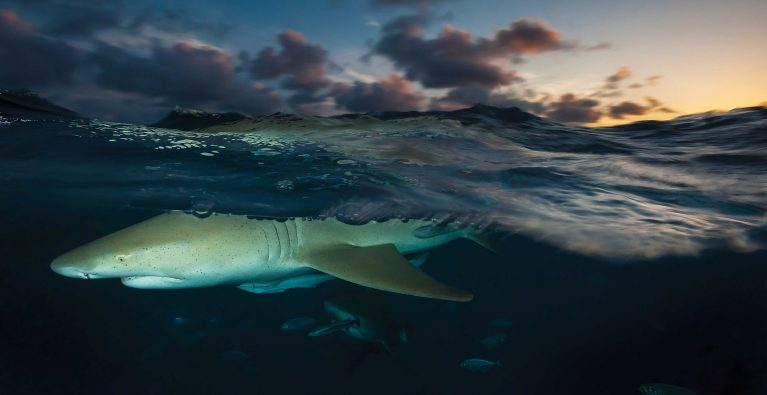Exploring Personality in Sharks