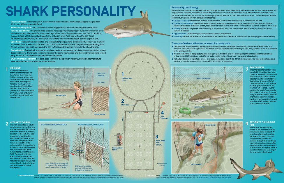 Shark Personality<br /> With a special focus on Bimini lslands, Bahamas<br /> Infographic design by Marc Dando | Content interpretation by Félicie Dhellemmes & Tristan Guttridge | © Save Our Seas Foundation Copyright 2016