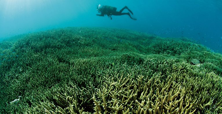 Corals in Crisis