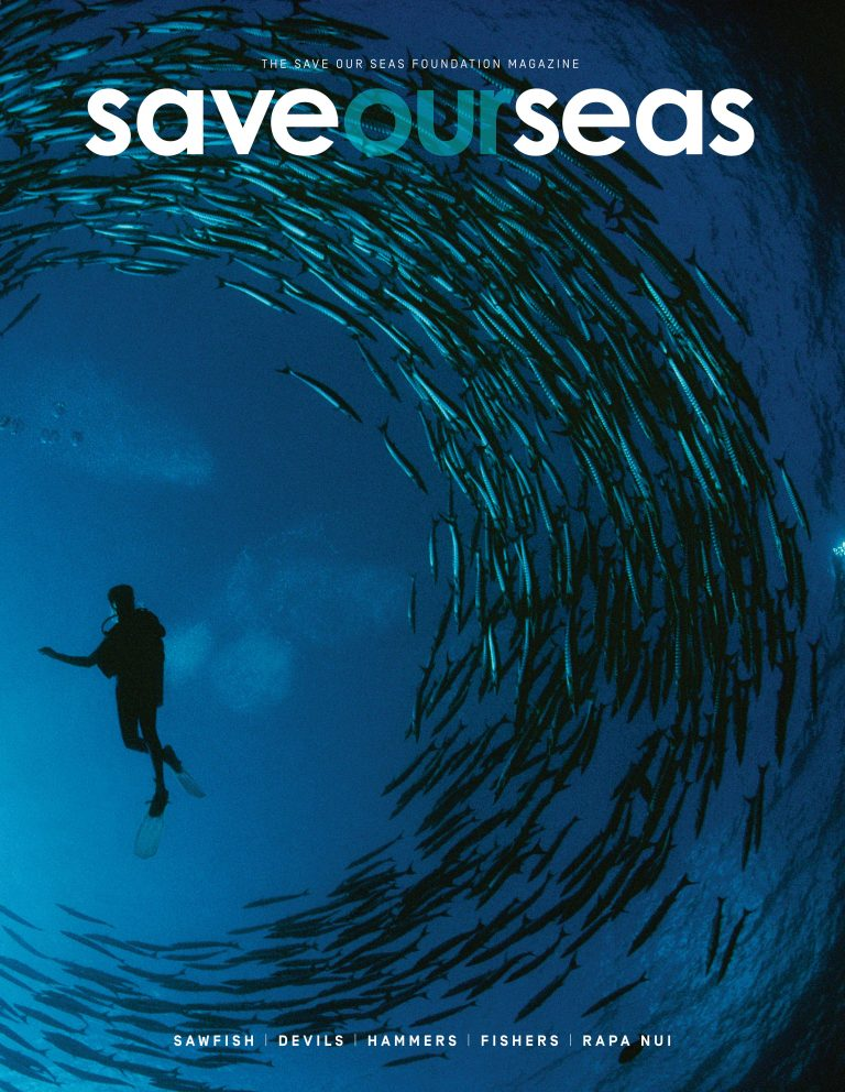 #7 Sawfish |Devils |Hammers |Fishers |Rapa Nui