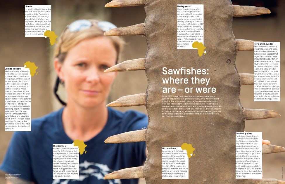 Ruth Leeney with a sawfish rostrum. Some fishermen keep sawfish rostra for decorative purposes.<br /> Photo by Chris Scarffe