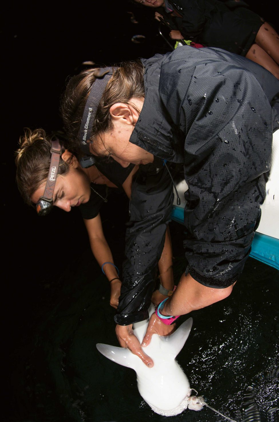 Eva Meyers (right) of the Angel Shark Project and Félicie Dhellemmes of the Bimini Biological Field Station work up a small shark at night.<br /> Photo by Sirachai Arunrugstichai