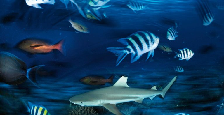 Are sharks safer in sanctuaries?