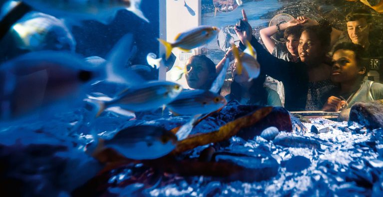 Summer holidays at the Shark Education Centre