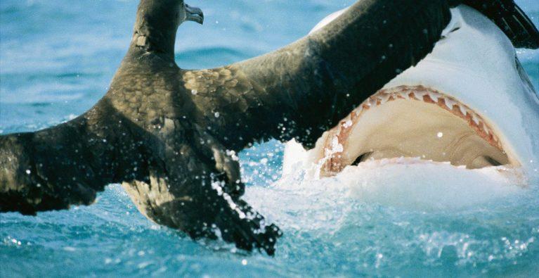 Unpredictable sharks
