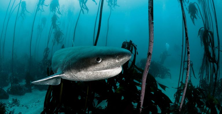 Rethinking False Bay's top predators
