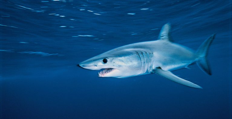 Shark tracking and fisheries-independent assessments
