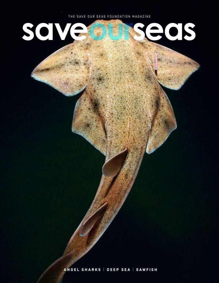 #9 Angel Sharks |Deep Sea |Sawfish
