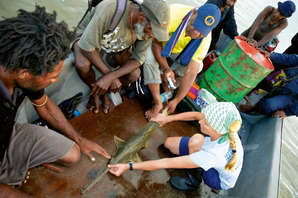 Measuring a live sawfish is a moment of excitement and hope for researcher Ruth Leeney. The fishermen look on, unfazed by a sighting seemingly common in their waters.<br /> Photo by Ruth Leeney