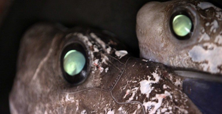 Discovering deep-sea sharks