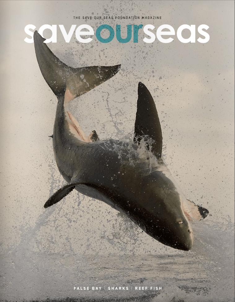 #3 False Bay | Sharks | Reef fish