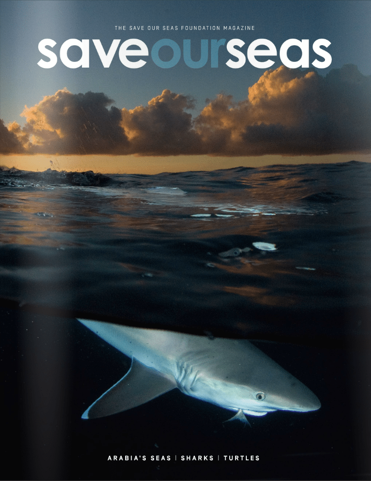 #2 False Bay | Sharks | Reef fish