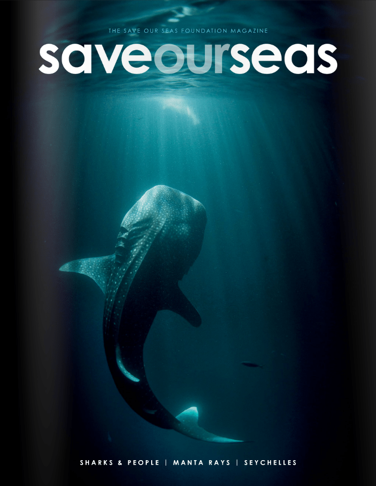 #1 Sharks & People |Manta Rays |Seychelles