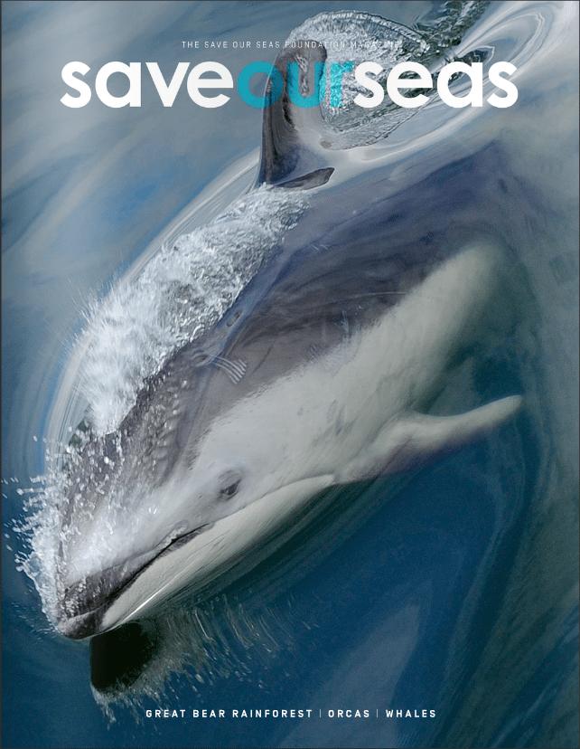 #4 Great Bear Rainforest | Orcas |Whales